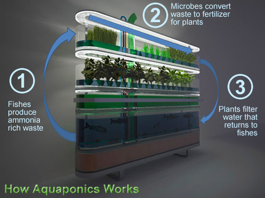 how does aquaponics work