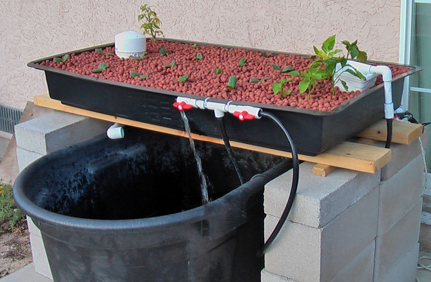 cheap aquaponics system