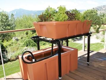 aquaponics system design