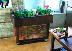 aquaponics at home
