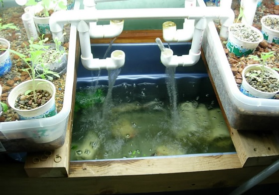 problems with aquaponics