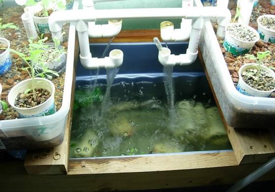 problems with aquaponics