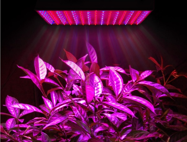 How to Choose the Right Grow Lights