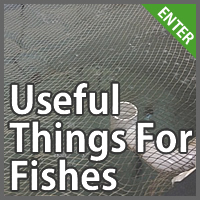 Things For Aquaponic Fish