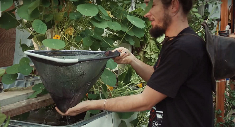How Aquaponic Farming Works